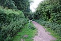 Path around University Broad, UEA - geograph.org.uk - 1389809.jpg