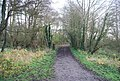 Path in Stodmarsh Nature Reserve - geograph.org.uk - 1619404.jpg