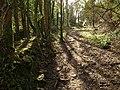 Path to Barncoose - geograph.org.uk - 1185546.jpg