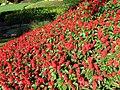 Peace Arch Park gardens (15140679189).jpg