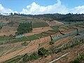 Pemandangan Luasnya perkebunan sayur yang indah di Lembah desa Kaligua Kab. Brebes (3).jpg