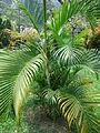 Penang Botanic Gardens (45).JPG