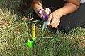 Perfectionism - Measuring Grass Blade2- 470x314 pix.jpg