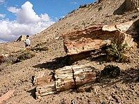 Petrified-wood-2.jpg