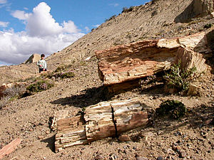Petrified Forest (Sarmiento) - Image: Petrified wood 2