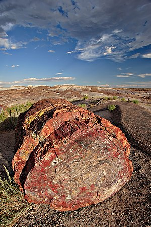 Plant - A petrified log in Petrified Forest National Park, Arizona