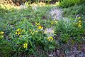 Pflanzenvielfalt im Naturschutzgebiet 'Gleistalhänge' bei Jena.jpg
