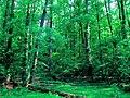 Photo-SwampHike.jpg