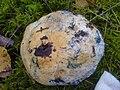 Piaskowiec modrzak p2.JPG