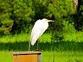 Pinckney Island National Wildlife Refuge (5958500252).jpg