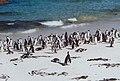 Pingüinos Sudáfrica - panoramio.jpg