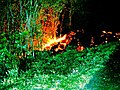 Piton Fournaise eruption 08 2004 03 enhanced.jpg
