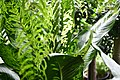 Plant of Thailand - 45.jpg