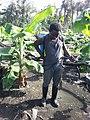 Plantain farmer.jpg