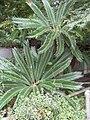 Plants at kamakura.JPG