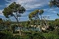 Platja de Castell - panoramio (1).jpg
