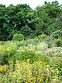 Poltava Botanical Garden (167).jpg