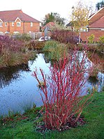 "Pond at Merrow Place A landscaped ""village pond"" in the green within a small, private, gated community. The green is surrounded mainly by expensive housing; planning permission was granted with a small row of ""affordable housing"" included."