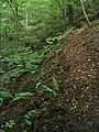 Precipitous footpath by Lead Brook - geograph.org.uk - 222602.jpg