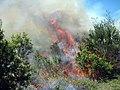 Prescribed fire at Ten Thousand Islands (6958790235).jpg