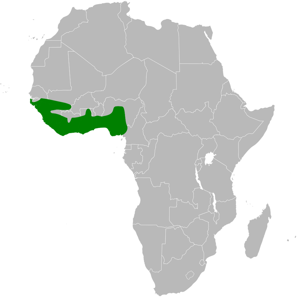 Psalidoprocne obscura distribution map