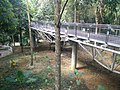 Putrajaya Botanical Garden in Malaysia 12.jpg