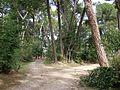 QTA- Bifurcación del camino oeste. Cartel actual tallado en tronco de árbol. (23741062292) (2).jpg