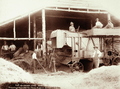 Queensland State Archives 2266 Threshing from 200 ton stack Hodgson Roma c 1899.png