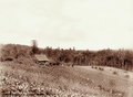 Queensland State Archives 2390 C M Nothlings vineyard and shingle roof cottage at Teutoberg Blackall Range c 1899.png