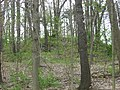 Raleigh Mound at Fredericktown.jpg