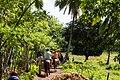 Rancho Español 32000, Dominican Republic - panoramio (17).jpg