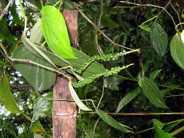 Nature sri lanka for Home garden design in sri lanka