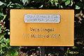 Rapperswil - Duftrosengarten - Yves Pioget TH Meilland 1984 2010-08-29 16-07-00.JPG