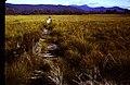 Rasselas Track - panoramio.jpg