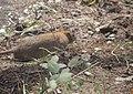 Rat à Brignoles 2.jpg
