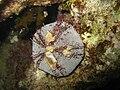 Red sea-reef 3926.jpg