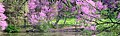 Redbud trees along Lake Marmo - Wikivoyage banner.jpg