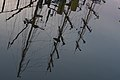 Reflection-1060722.jpg