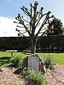 Renansart (Aisne) arbre de la liberté.JPG