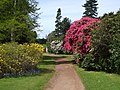 Rhododendrons flowering in Cannon Park - geograph.org.uk - 1295250.jpg