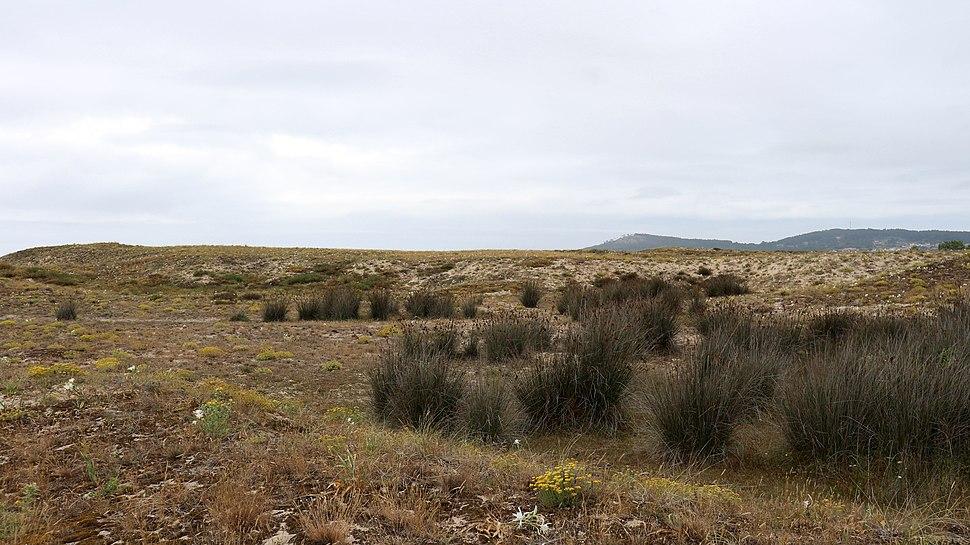 Ribeira PN Dunas de Corrubedo e lagoas de Carregal e Vixán 29