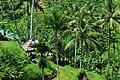 Rice Fields in Ubud Indonesia Bali - panoramio (10).jpg