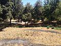 Riserva naturale orientata Bosco di Santo Pietro 12.jpg