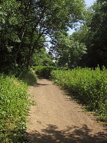 River Avon Trail at Bickley Wood (geograph 3563590).jpg