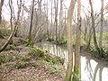 Rivière d'Angerville 2.JPG