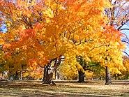 RocPark Genesee River Park (4056716826)