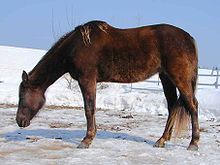 Rock-mountain-horse-2.jpg