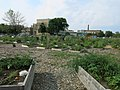 Rogers Park Chicago IL Community Garden.jpg