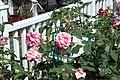 Rosa Gene Boerner 3zz.jpg