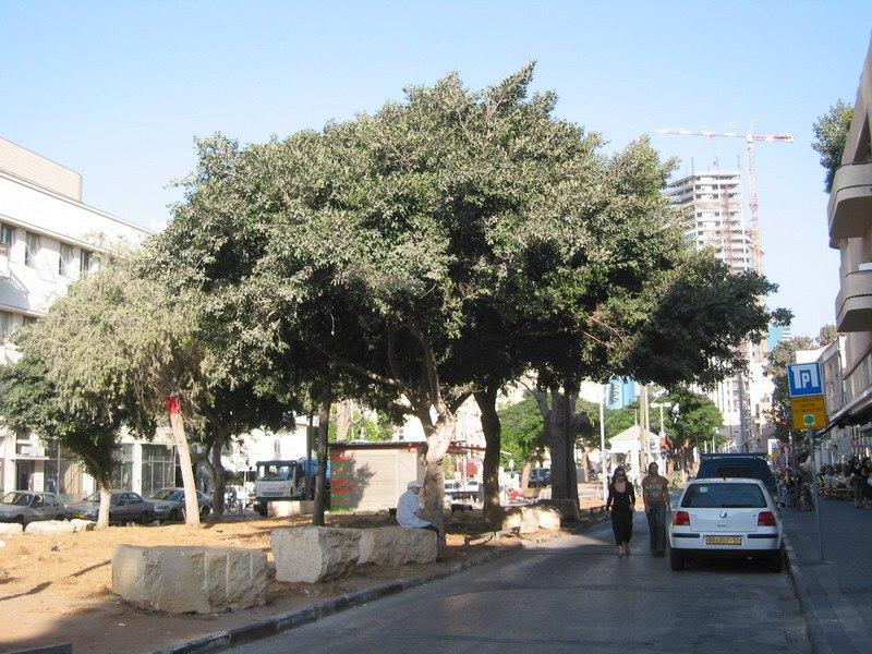 Rothschild Boulevard5